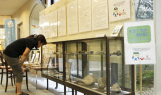 貝殻化石を展示㉕